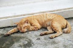 猫肮脏的睡眠 库存图片