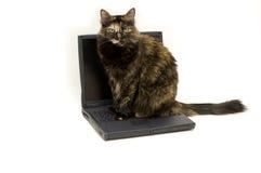 猫膝上型计算机 免版税库存照片