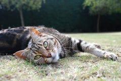 猫舒展 免版税库存图片