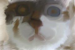 猫艺术  免版税库存照片