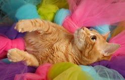 猫芭蕾舞短裙5 库存图片