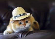 猫英俊的帽子 免版税库存图片
