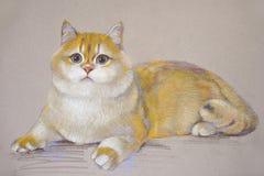 绘画猫英国shorthair 皇族释放例证