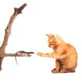猫蜥蜴使用 免版税库存照片