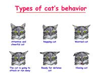猫行为的类型在白色背景的 殷勤和快乐的猫,小睡,担心,猫攻击或跑 向量例证