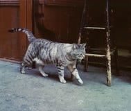 猫街道 图库摄影