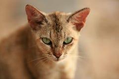 猫街道 库存图片