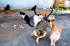 猫街道 库存照片