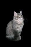 猫衣衫褴褛的儿童 免版税库存图片