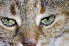 猫表面 库存图片