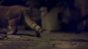 猫被惊吓某事和跑掉 股票录像