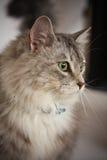 猫被注视的绿色 图库摄影