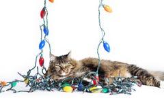猫被缠结的圣诞灯 免版税库存图片