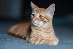 猫被转动到左边 免版税库存图片