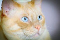 猫观察 图库摄影