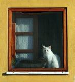 猫视窗 库存图片
