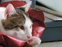 猫认为 免版税图库摄影