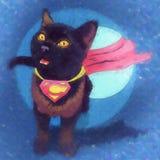 猫超级英雄 超人 免版税库存图片