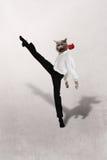 猫跳舞与一朵红色花的探戈在灰色背景 库存照片