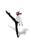 猫跳舞与一朵红色花的探戈在白色背景 库存照片