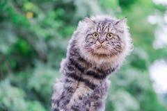 猫跳跃和绿色bokeh 库存照片