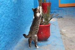 猫跳跃 免版税库存照片