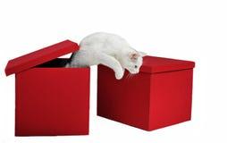 猫跳 免版税库存图片