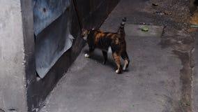 猫转回去与黑暗的背景 免版税图库摄影