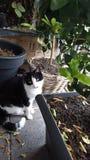 猫透视 库存照片