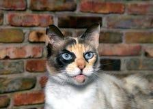 猫逗人喜爱一点照片摆在 库存照片
