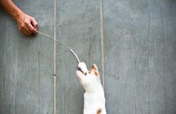 猫逗人喜爱使用 免版税库存图片