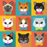 猫逗人喜爱的模式 库存照片