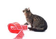 猫逗人喜爱的红色丝带平纹 库存照片