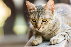 猫逗人喜爱的纵向 图库摄影