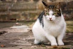 猫逗人喜爱的纵向 免版税库存照片