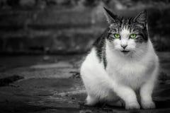 猫逗人喜爱的纵向 免版税库存图片