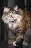 猫逗人喜爱的纵向s 库存照片