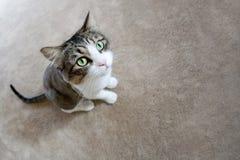 猫逗人喜爱的软件 免版税库存图片