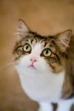 猫逗人喜爱的软件 免版税库存照片