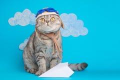 猫逗人喜爱的飞行员飞行员,在一名飞机飞行员的面具和风镜的苏格兰Whiskas有空间的设计的 飞行员的概念 免版税库存照片