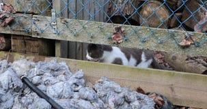 猫通过漏洞做了它的方式成谷仓 影视素材