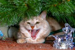 猫遇见新年和等待的礼物 免版税库存照片