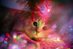 猫遇见新年和等待的礼物 库存照片