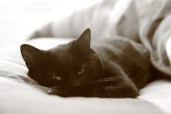 猫醒 免版税图库摄影