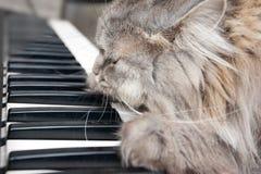 猫钢琴演奏家 免版税库存图片