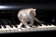 猫钢琴 库存照片