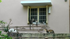 猫闲谈 免版税库存图片