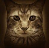 猫难看的东西 库存图片