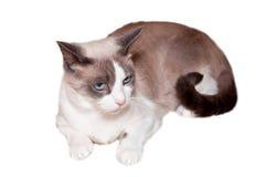 猫雪靴 库存照片