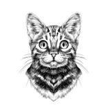 猫面孔剪影传染媒介 免版税库存照片